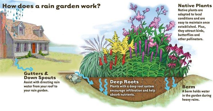 Rain    Garden       Guide      Seekamp Environmental Consulting  Inc