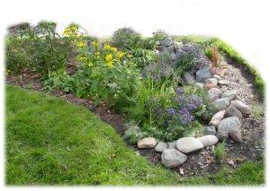 Mature Rain Garden
