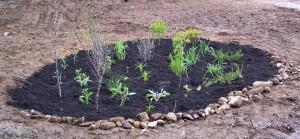 Newly Planted Rain Garden